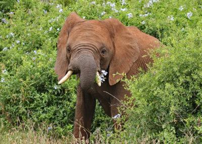 Mosaic Tourism - Addo Elephant National Park Tour