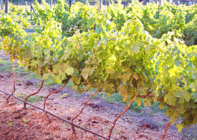 Mosaic Tourism - Theescombe Wine Estate Tour