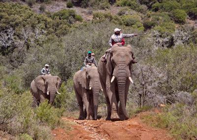 Mosaic Tourism - ADDO ELEPHANT ENCOUNTERS TOUR
